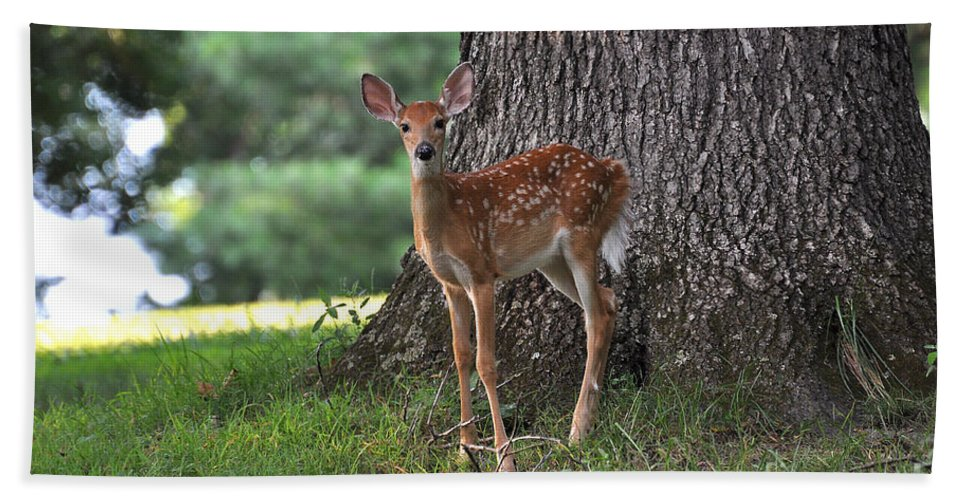 Fawn Bath Sheet featuring the photograph Fawn by Todd Hostetter