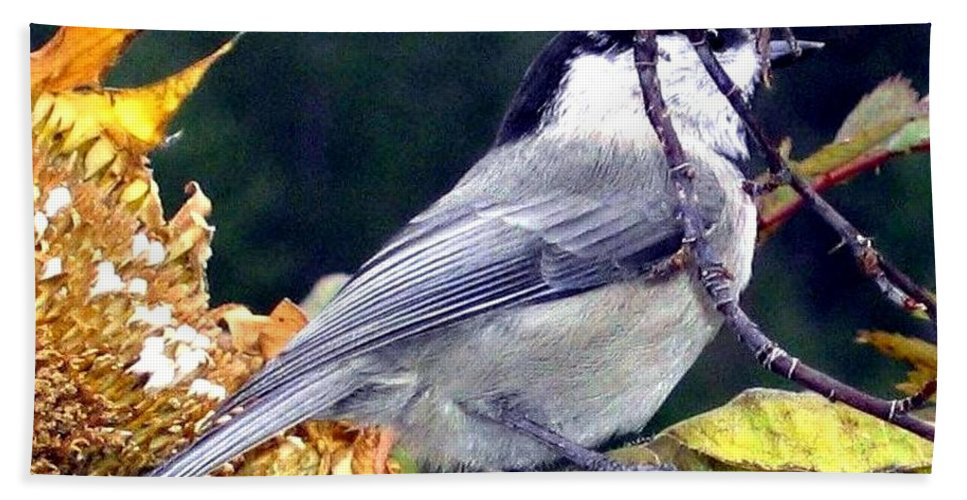 Autumn Bath Towel featuring the photograph Feast For A Chickadee by Will Borden