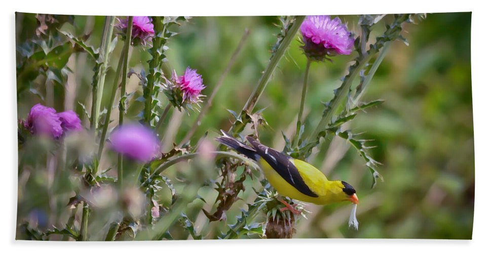 Goldfinch Bath Sheet featuring the photograph Feasting In The Flowers by Kerri Farley