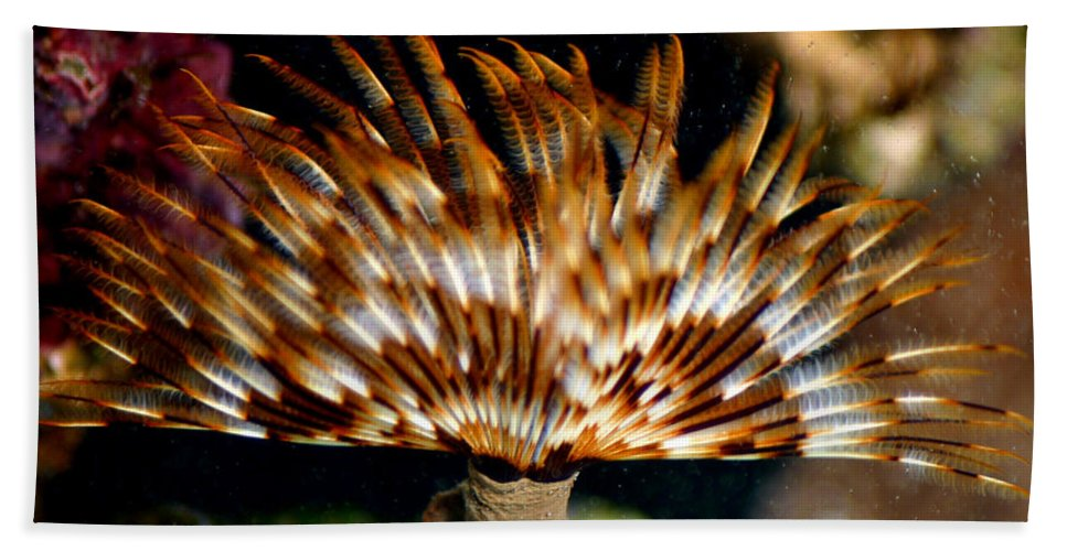 Feather Duster Bath Sheet featuring the photograph Feather Duster by Anthony Jones