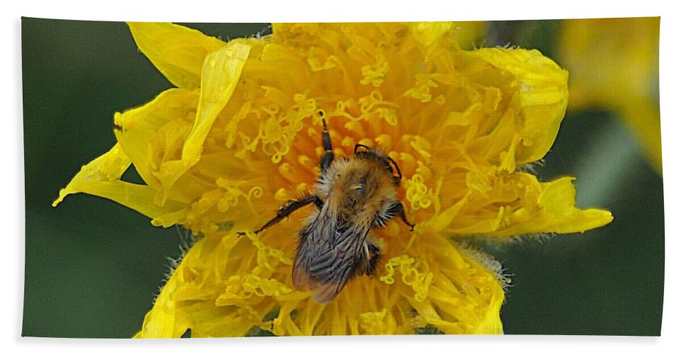 Insect Hand Towel featuring the photograph Feeding 2 by John Hughes