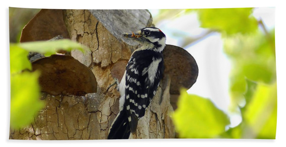 Downy Woodpecker Bath Sheet featuring the photograph Feeding Time by David Lee Thompson