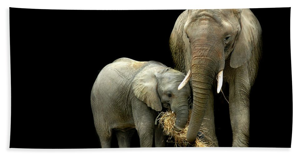 Elephant Hand Towel featuring the photograph Feeding Time by Stephie Butler