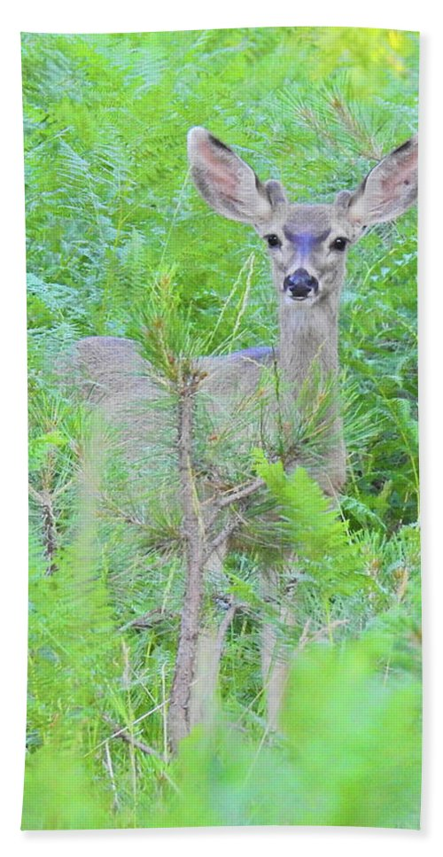 Deer Hand Towel featuring the photograph Feeling Safe by Sandra O'Toole