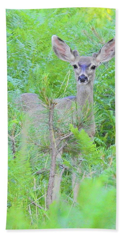 Deer Bath Sheet featuring the photograph Feeling Safe by Sandra O'Toole