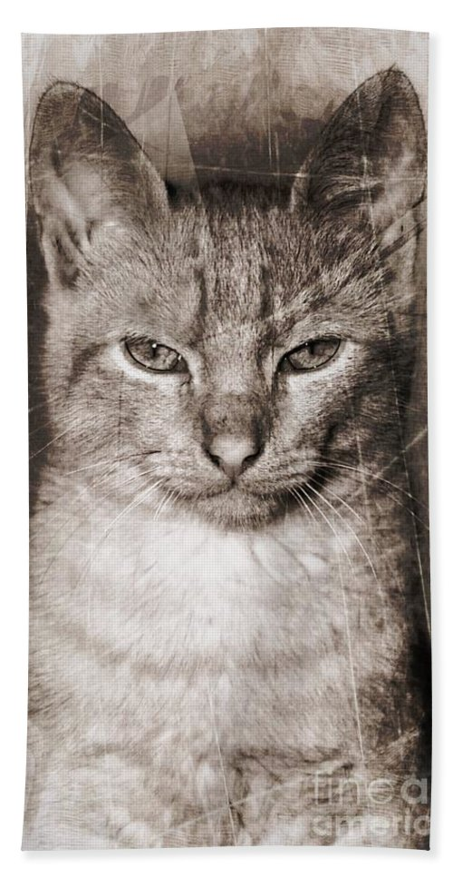 Cat Bath Sheet featuring the photograph Feline by Clare Bevan