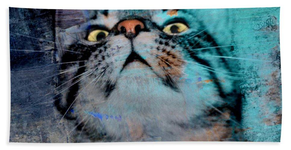Feline Focus Hand Towel featuring the photograph Feline Focus by Kathy M Krause