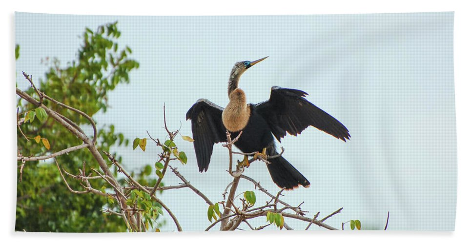 A. Anhinga Bath Sheet featuring the photograph Female Anhinga by Rich Leighton