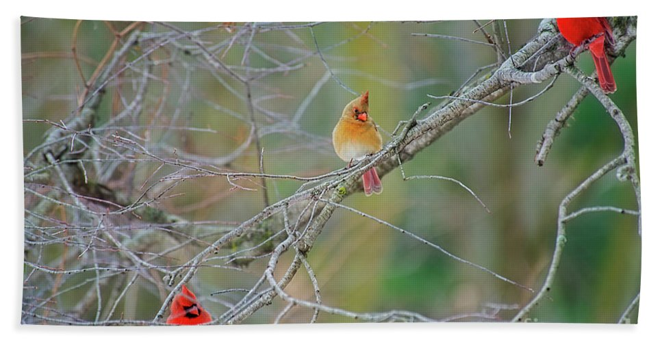 Cardinals Bath Sheet featuring the photograph Female Cardinal And Friends by David Arment