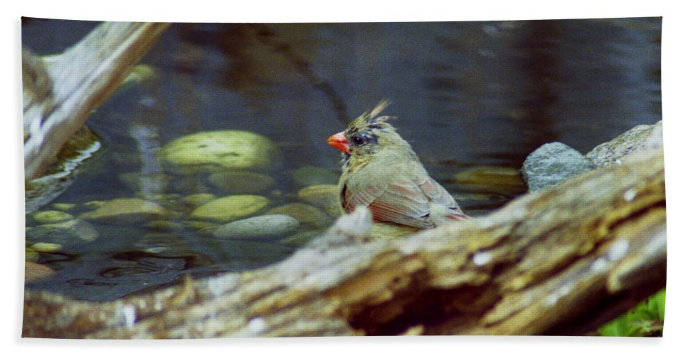 Female Hand Towel featuring the photograph Female Cardinal by Michael Peychich