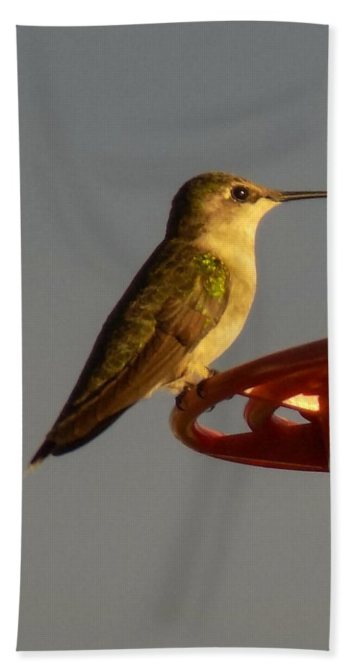 Hummingbird Bath Sheet featuring the photograph Female Hummingbird by William Tasker