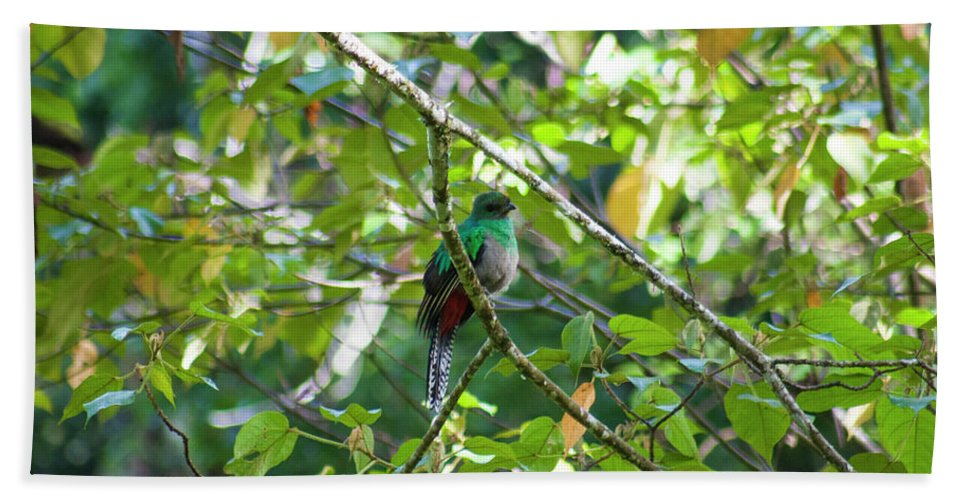 Female Hand Towel featuring the photograph Female Quetzal by Wes Hanson