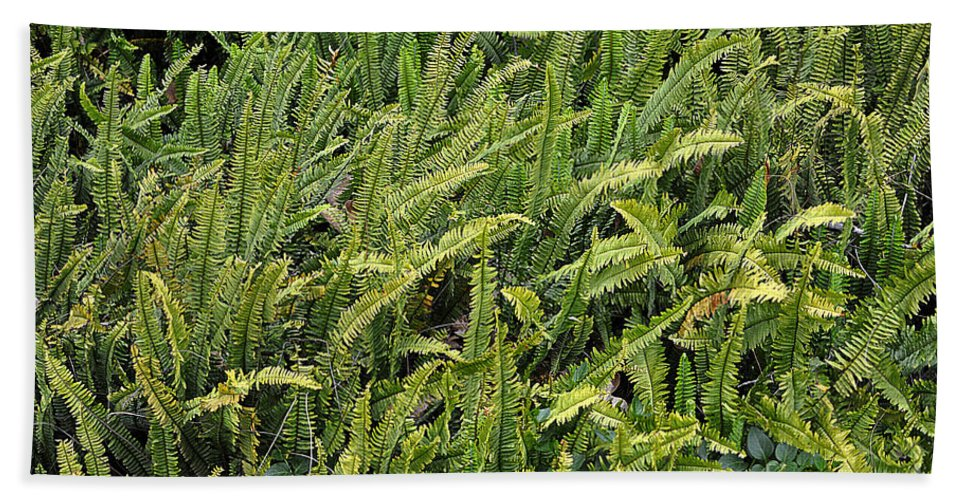 Clay Bath Towel featuring the photograph Fern by Clayton Bruster
