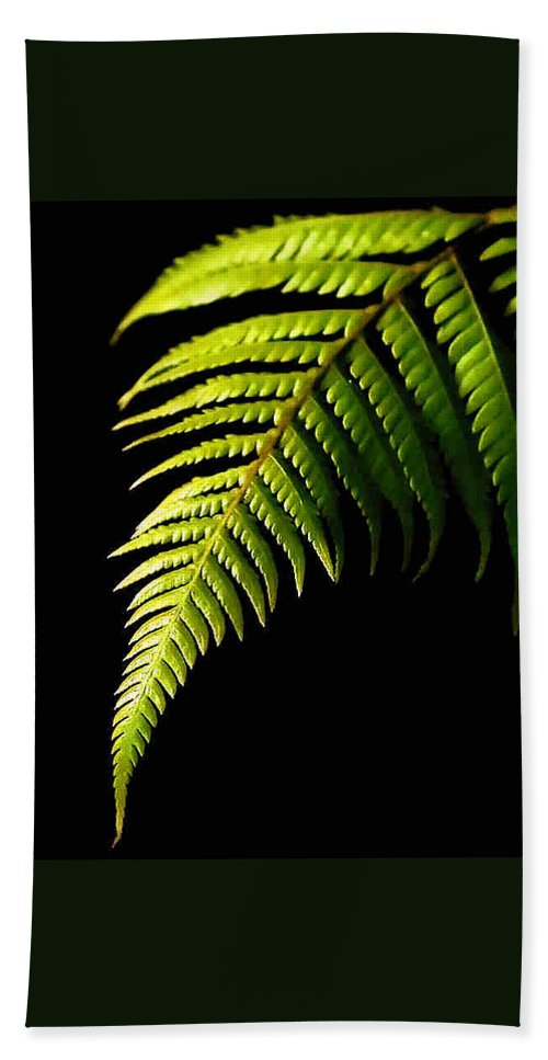 Fern Hand Towel featuring the photograph Fern by Dragica Micki Fortuna