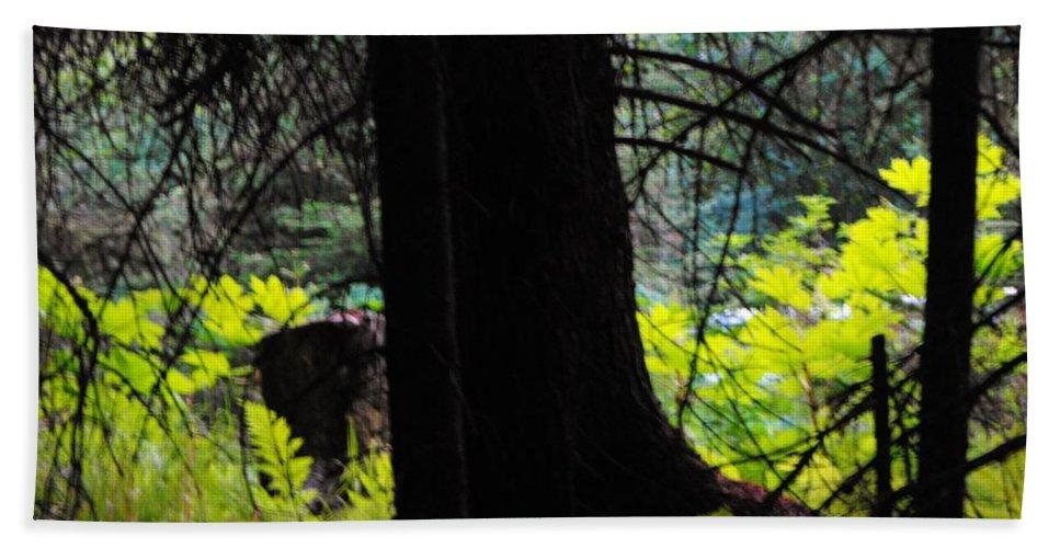 Fern Forrest Bath Sheet featuring the photograph Fern Forest by Lori Mahaffey