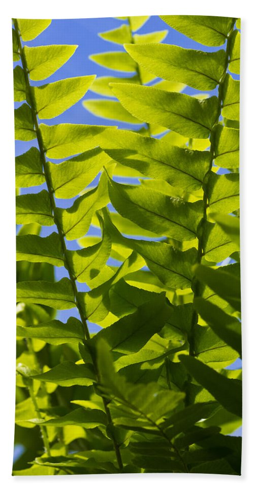 Spring Hand Towel featuring the photograph Fern Fronds Against Blue Sky by John Trax