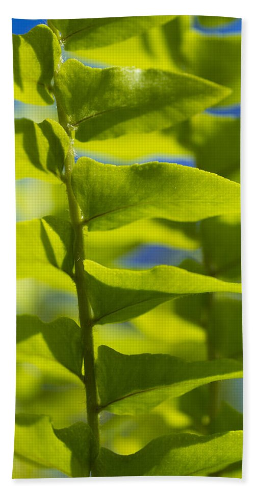 Macro Hand Towel featuring the photograph Fern Fronds by John Trax