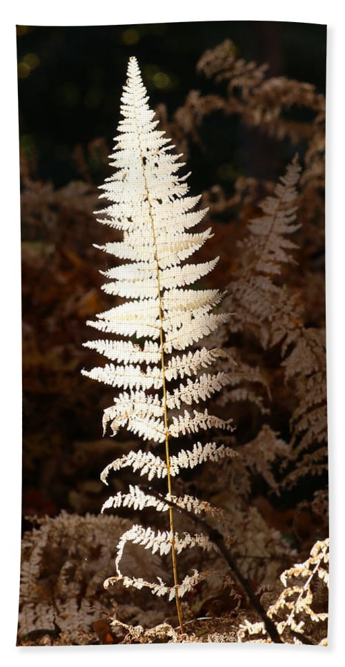 Fern Hand Towel featuring the photograph Fern Glow 1 by William Selander