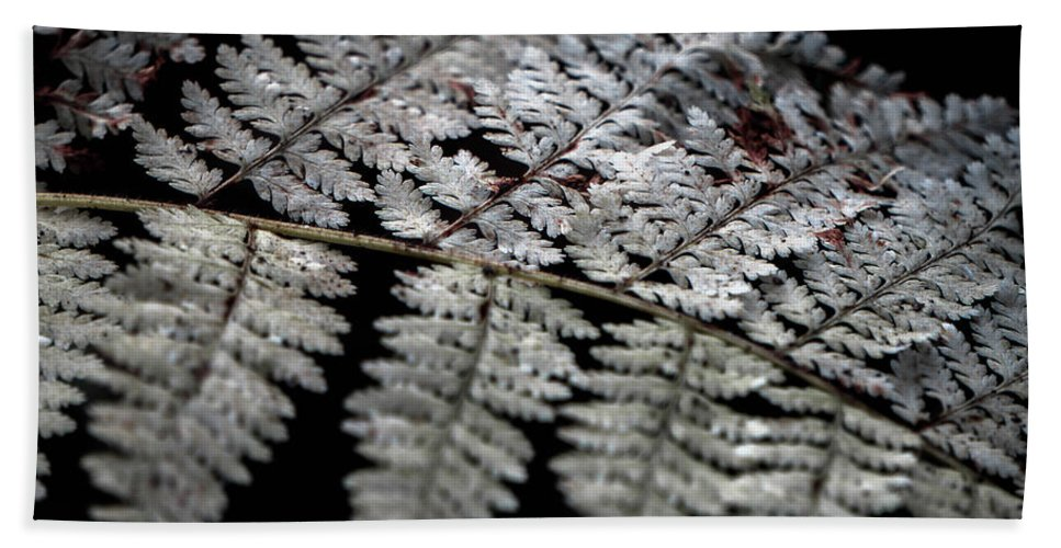 Hand Towel featuring the photograph Fern by Jessie Henry