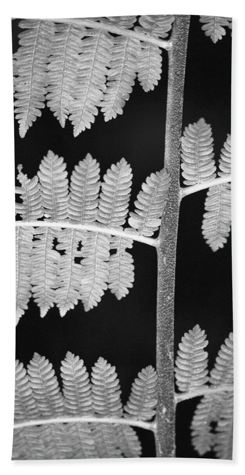Fern Leaves Bath Towel featuring the photograph Fern Leaves 1 by Donna Corless