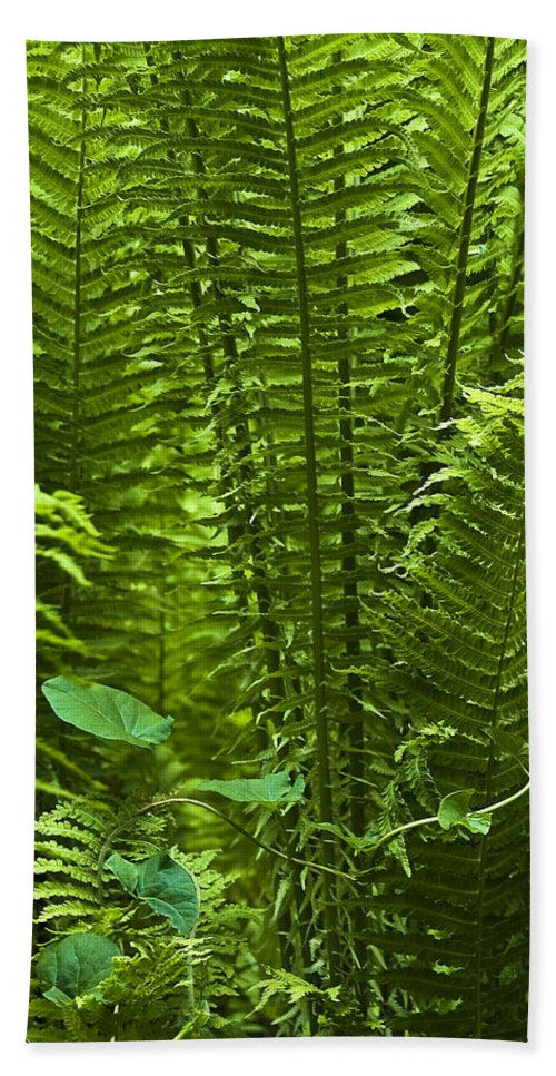 Countryside Bath Sheet featuring the photograph Fern by Svetlana Sewell
