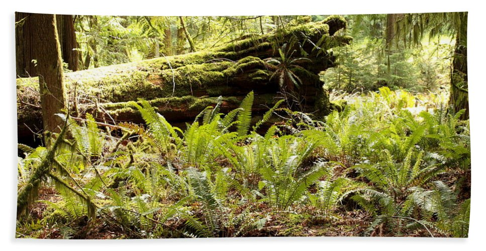 Ferns Hand Towel featuring the photograph Fern Valley by Carol Groenen