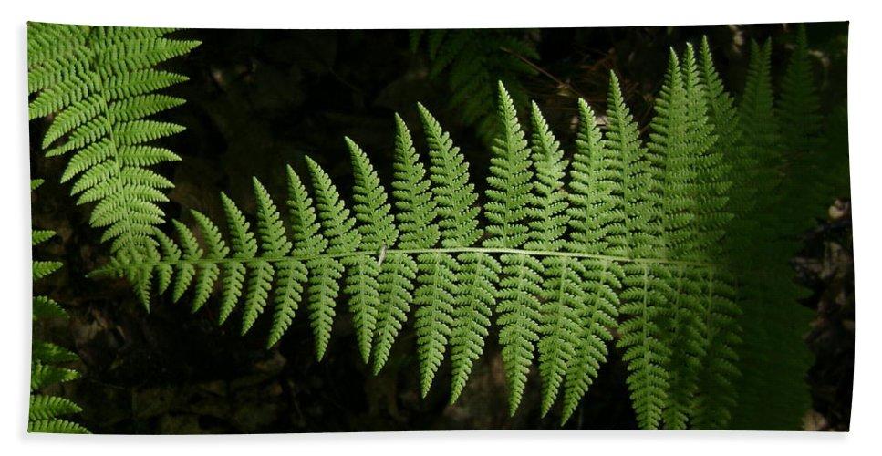 Nature Bath Sheet featuring the photograph Ferns by Gene Lossman