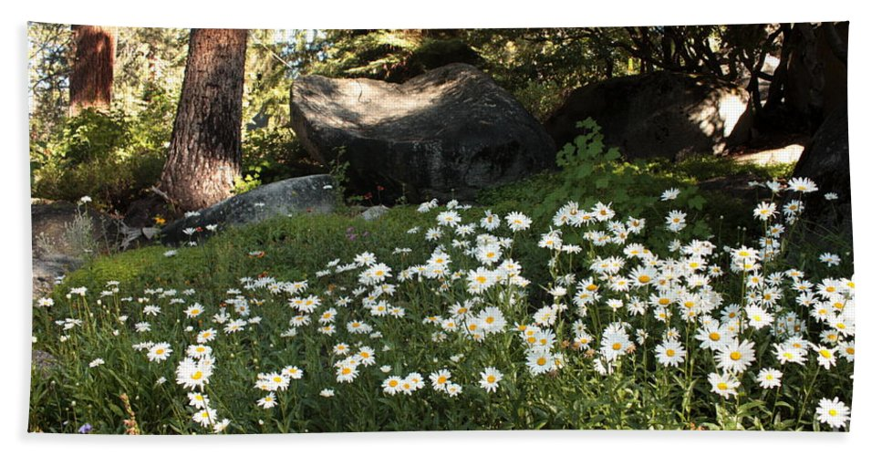 Tahoe Flowers Bath Sheet featuring the photograph Field Of Daisies In Tahoe by Carol Groenen