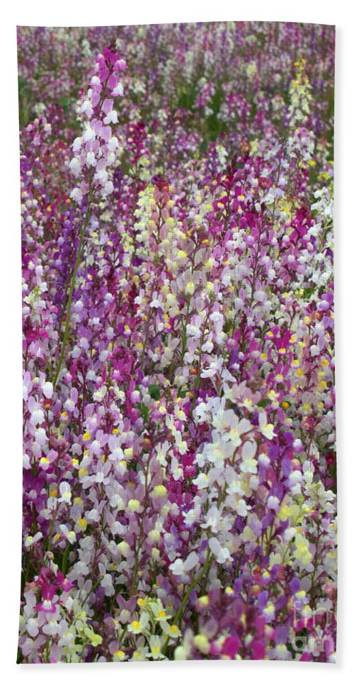 Flowers Bath Towel featuring the photograph Field Of Multi-colored Flowers by Carol Groenen