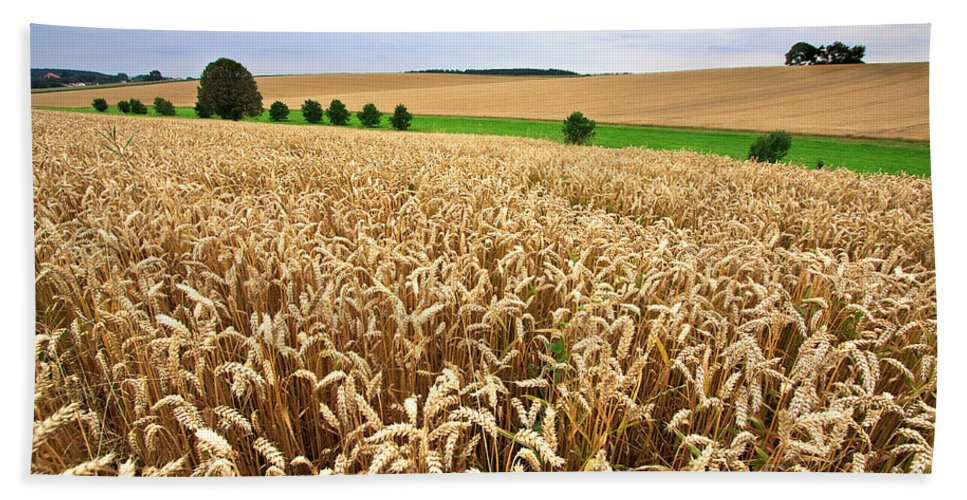 Agriculture Bath Towel featuring the photograph Field Of Wheat by Nailia Schwarz