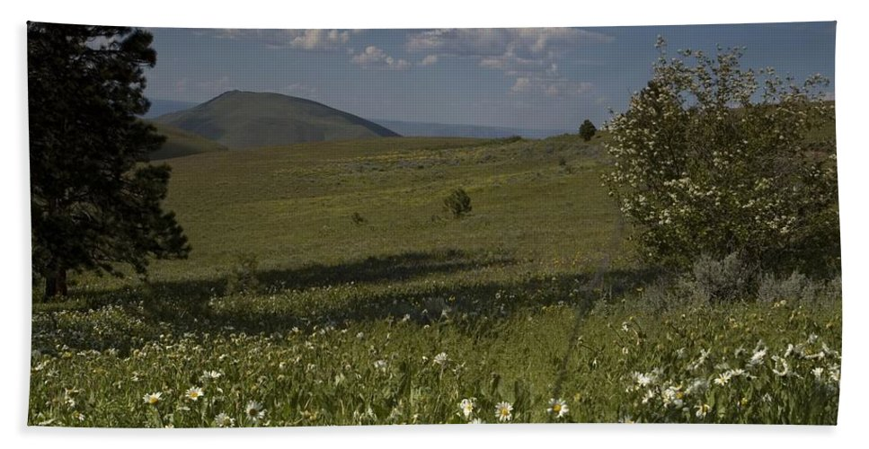 Field Bath Sheet featuring the photograph Field Of White Flowers by Sara Stevenson