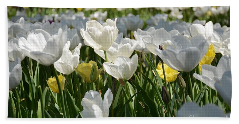 Hand Towel featuring the painting Field Of White Tulips by Constance Woods
