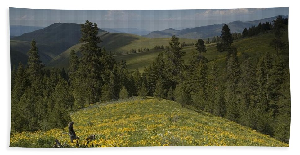 Field Bath Sheet featuring the photograph Field Of Yellow Flowers by Sara Stevenson