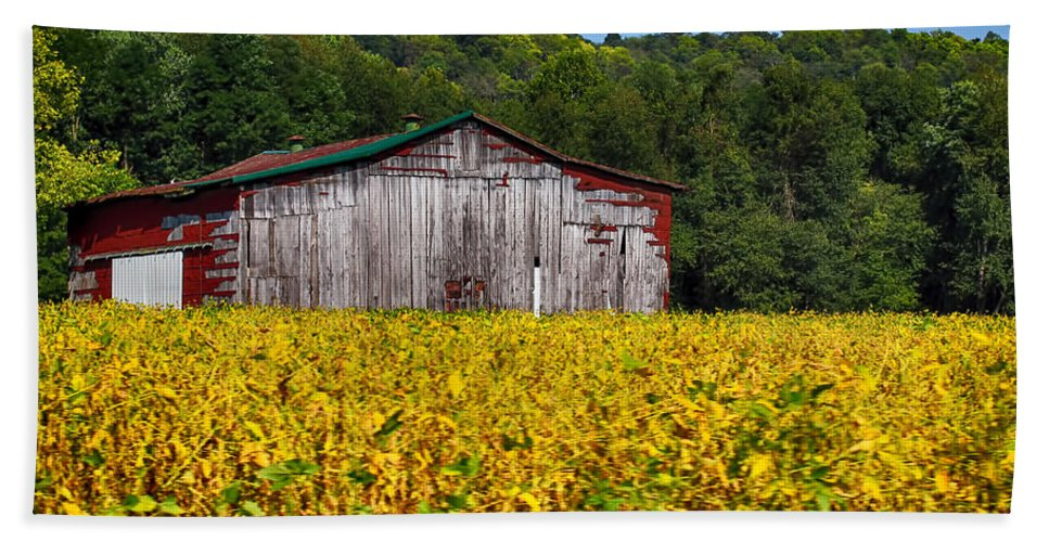 Barn Bath Sheet featuring the photograph Fields Of Gold by Tammy Sullivan