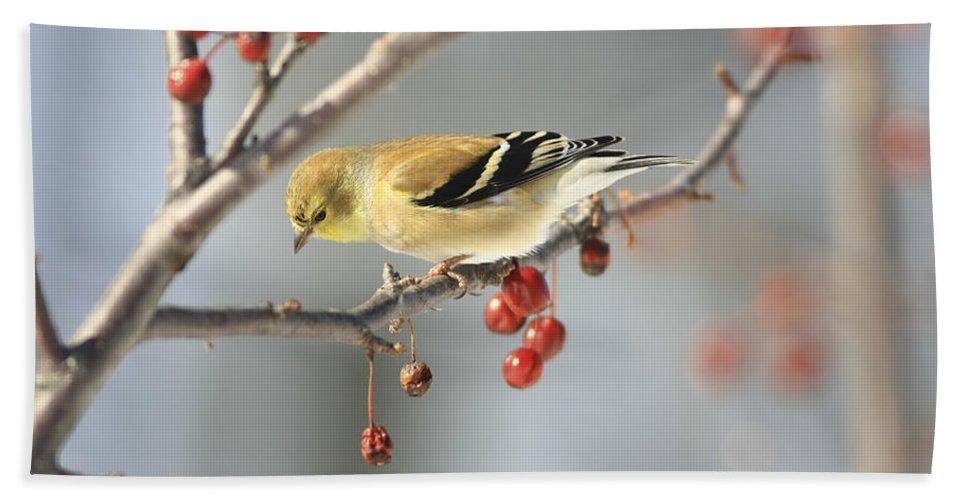 Finch Bath Sheet featuring the photograph Finch Eyeing Seeds by Deborah Benoit