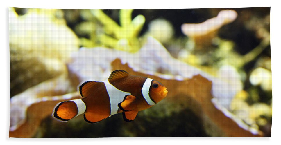 Nemo Hand Towel featuring the photograph Finding Nemo by Marilyn Hunt