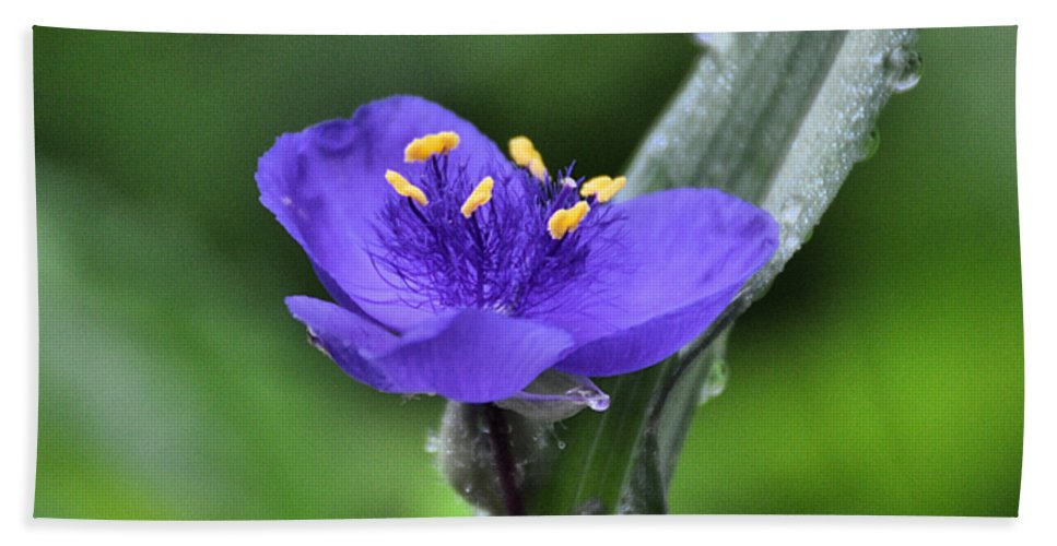 Flower Hand Towel featuring the photograph Fine Filaments by Rich Bodane