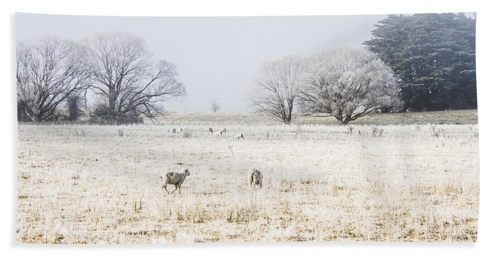 Sheep Hand Towel featuring the photograph Fingal Winter Farmyard by Jorgo Photography - Wall Art Gallery