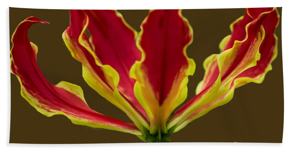 Lily Bath Sheet featuring the photograph Fire Lily by Zina Stromberg