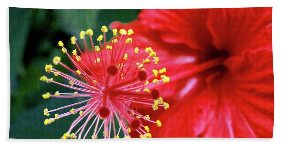 Photography Bath Sheet featuring the photograph Fireworks - Hibiscus by Kaye Menner