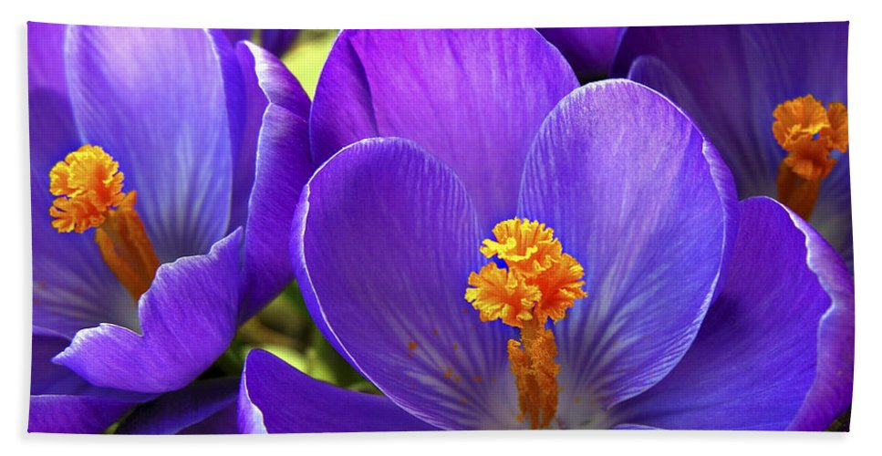 Flower Hand Towel featuring the photograph First Crocus by Marilyn Hunt
