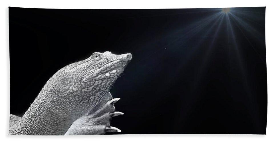 Turtle Bath Sheet featuring the photograph Fish 34 by Ben Yassa