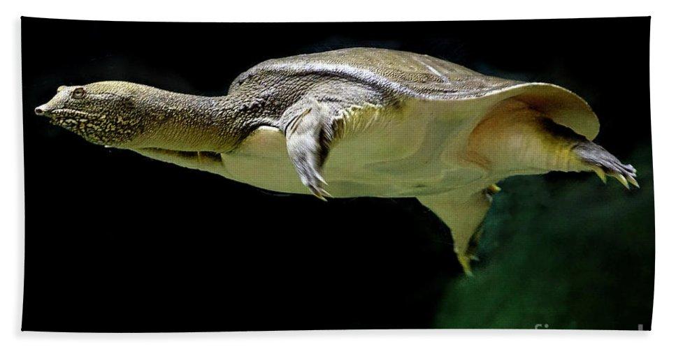 Turtle Bath Sheet featuring the photograph Fish 37 by Ben Yassa
