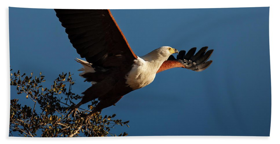 Fish Hand Towel featuring the photograph Fish Eagle Taking Flight by Johan Swanepoel