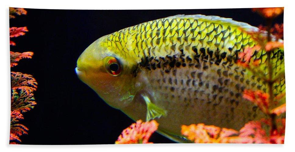 Fish Bath Sheet featuring the photograph Fish by Rick Monyahan