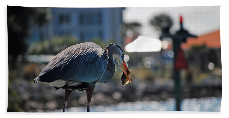 Gray Heron Hand Towel featuring the photograph Fishing by Robert Meanor