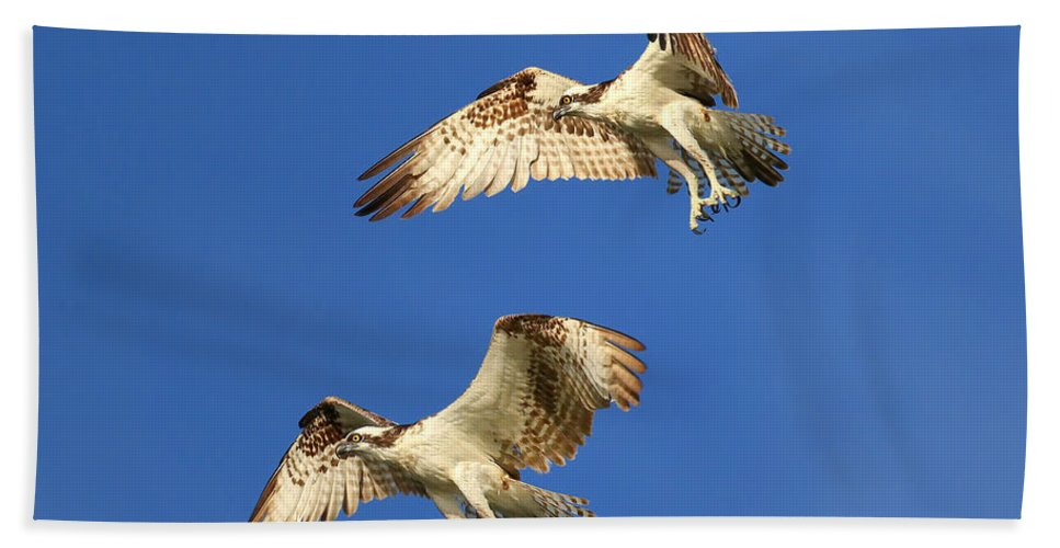 Bird Hand Towel featuring the photograph Fishing Tandem by John Absher
