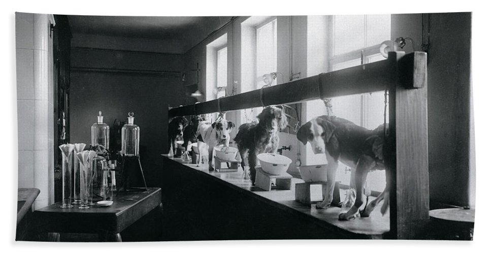 History Bath Sheet featuring the photograph Five Dogs Undergoing Pavlovs by Wellcome Images