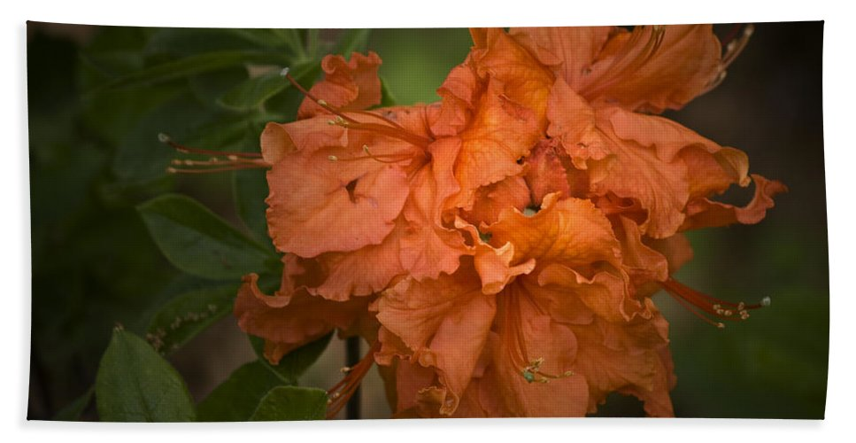 Flame Bath Sheet featuring the photograph Flame Azalea by Teresa Mucha