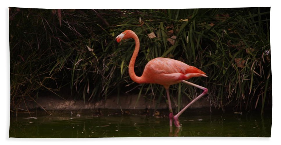 Flamingo Hand Towel featuring the photograph Flamingo 1 San Diego Zoo by Phyllis Spoor